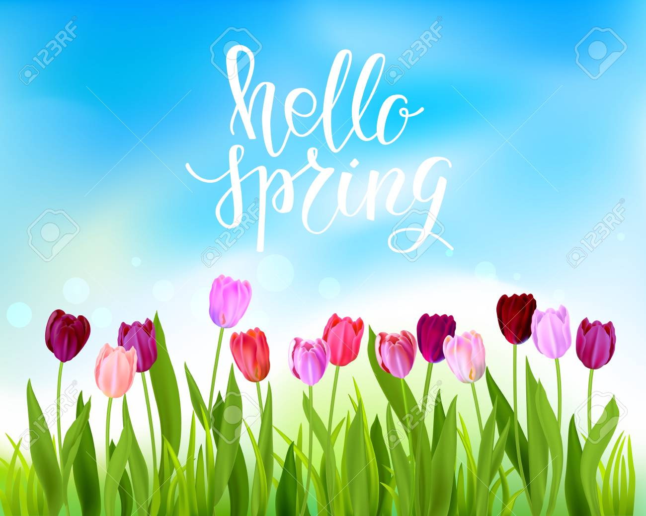 Hello Spring Banner With Tulips Flowers Vector Illustration Royalty Free Cliparts Vectors And Stock Illustration Image 96847554