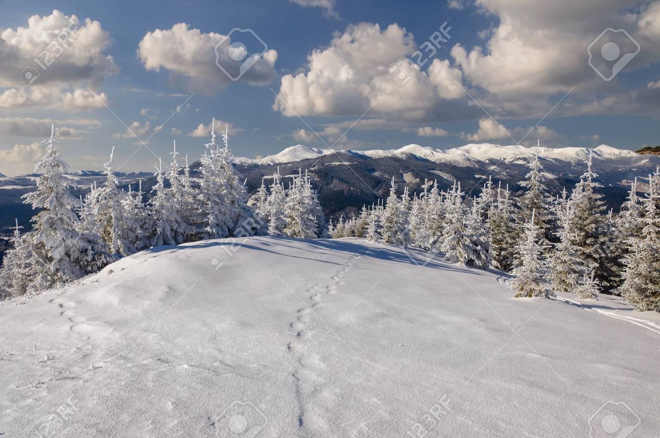 Paysage Dhiver Dans Les Montagnes Avec Le Sapin Enneigé