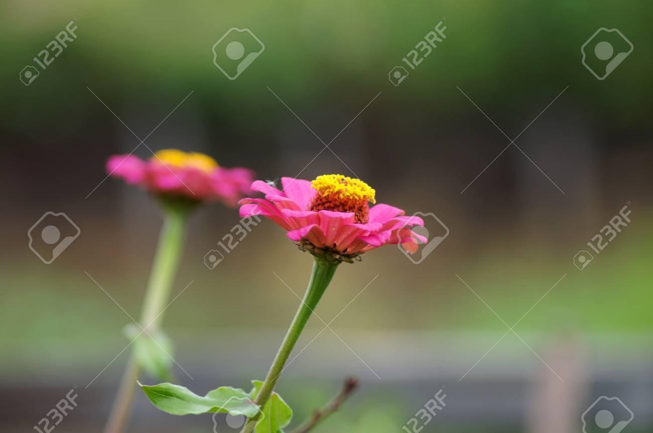 Fleur Aout