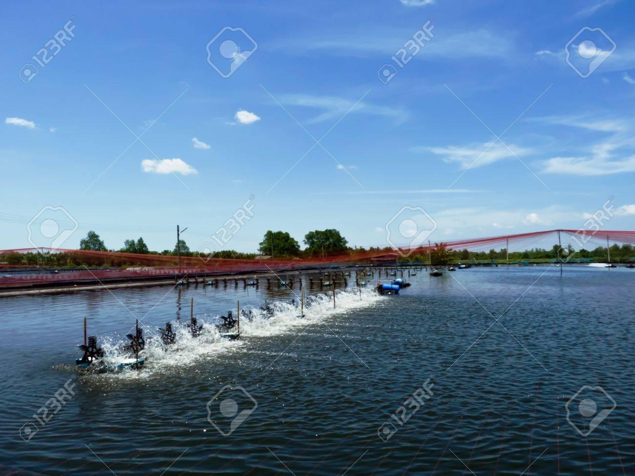 En los camarones del estanque en el aireador por la mañana rueda de paletas se están ejecutando Foto de archivo - 14075877
