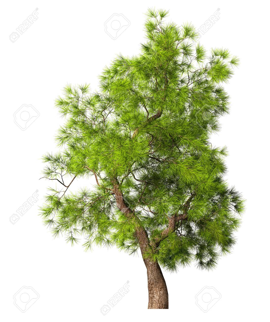 Coniferous evergreen spruce tree with a lush crown on a white background. 3D illustration - 149821609
