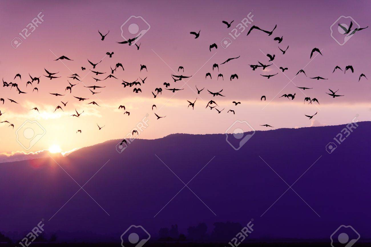 Flock of Birds Flying at the Sunset above Mountian in Golan Heights (North of Israel) - 11784971