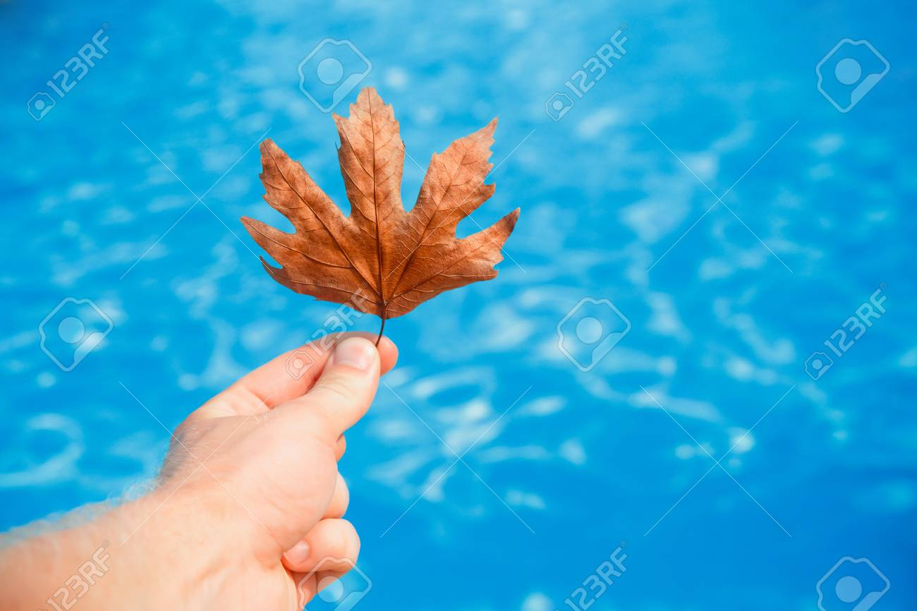 Hand of cleaner holds fall leaves on background swimming pool..