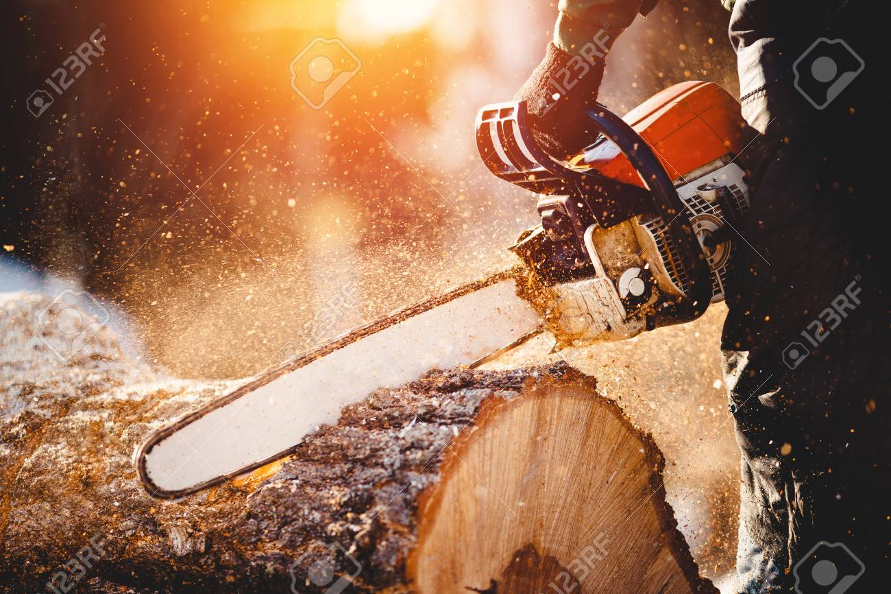 Chainsaw. Close-up of woodcutter sawing chain saw in motion, sawdust fly to sides. Concept is to bring down trees. - 98195897