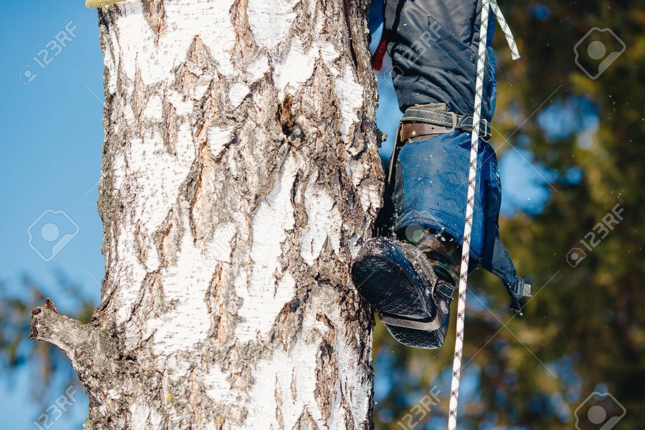 Device for climbing a tree  Arborist using a chainsaw to cut