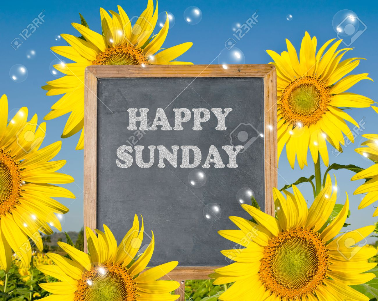 Happy Sunday with blooming sunflower on background Stock Photo - 32641789