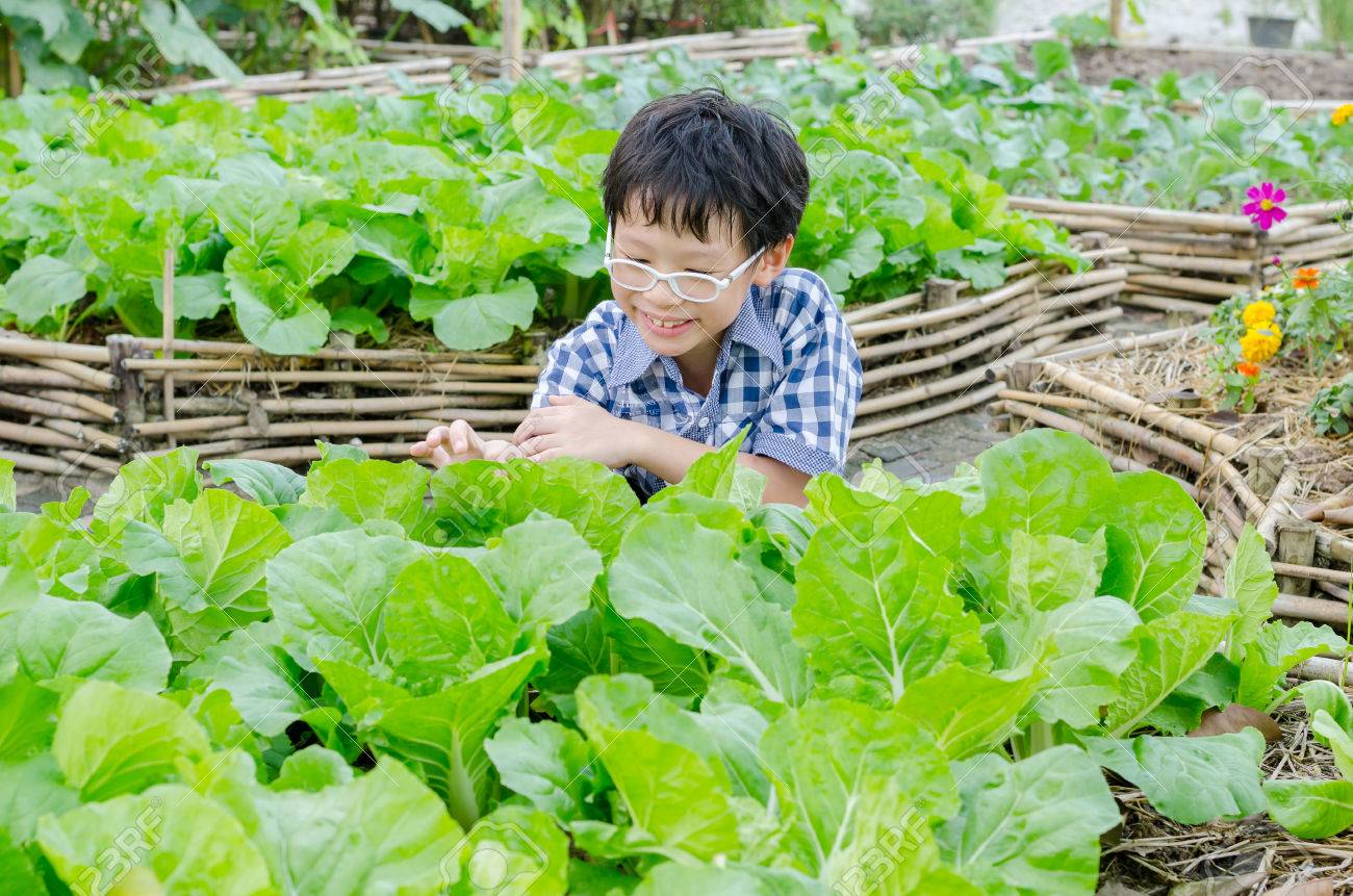 Asian boy working in vegetable farm Stock Photo - 53135433