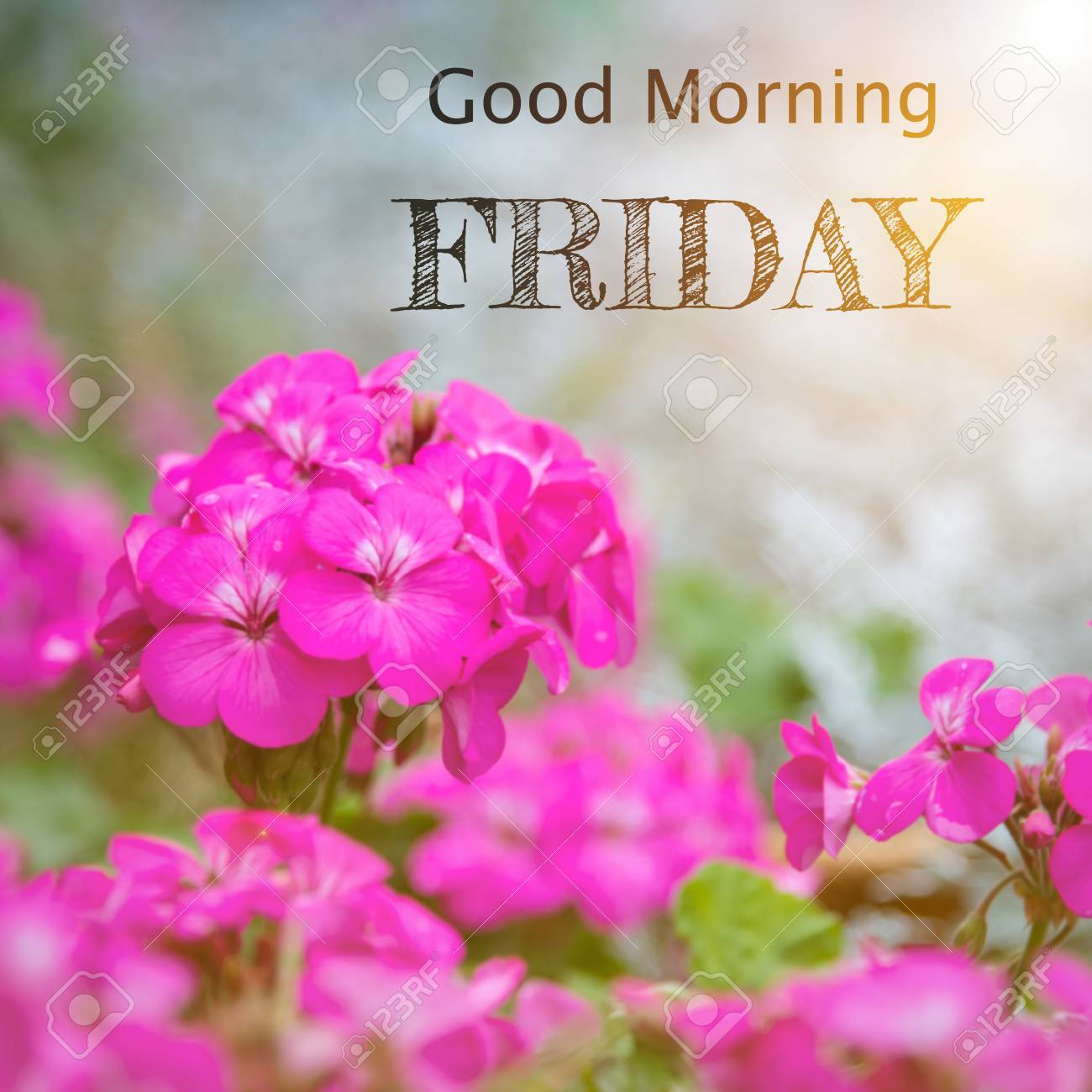 Good Morning Friday Stock Photo Picture And Royalty Free Image