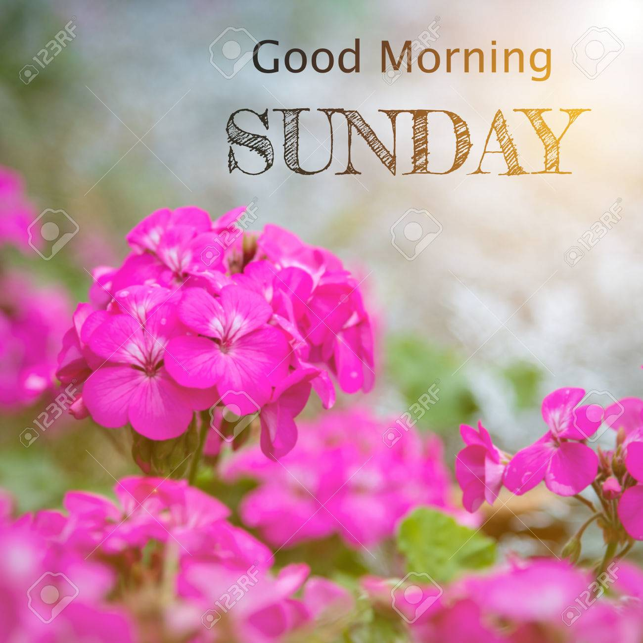 Good Morning Sunday Stock Photo Picture And Royalty Free Image
