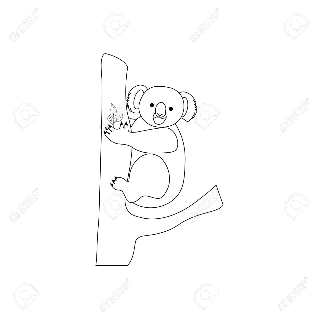 Koala Bear Coloring Pages On The White Background Vector
