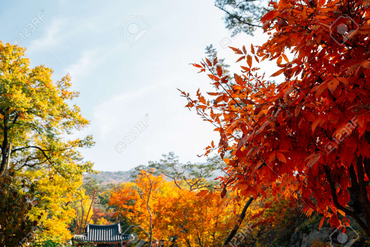 Bukhansan mountain maple forest in Seoul, Korea - 158413807