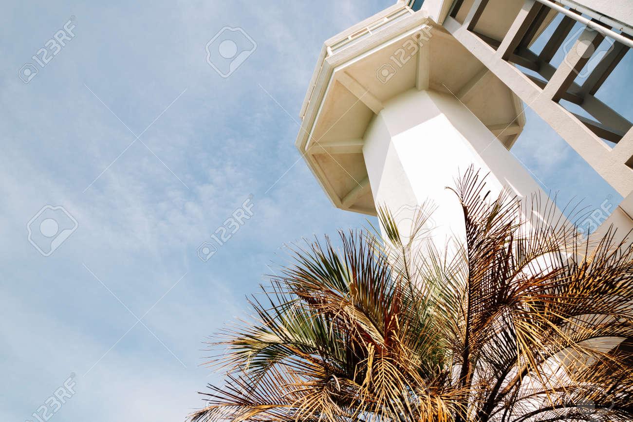 Lighthouse with palm tree at Odongdo Island in Yeosu, Korea - 168681303