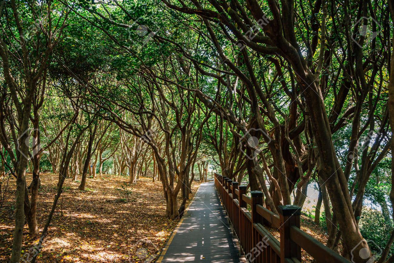 Odongdo Island forest road in Yeosu, Korea - 168681563