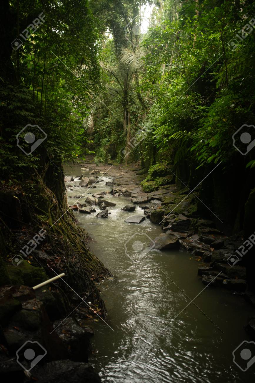 Awesome Nature Beautiful Landscape Of Asian Jungle With Small