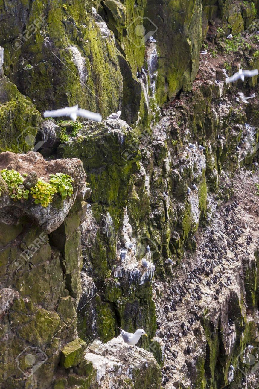 Látrabjarg Bird Cliffs Iceland Bird Latrabjarg Cliffs