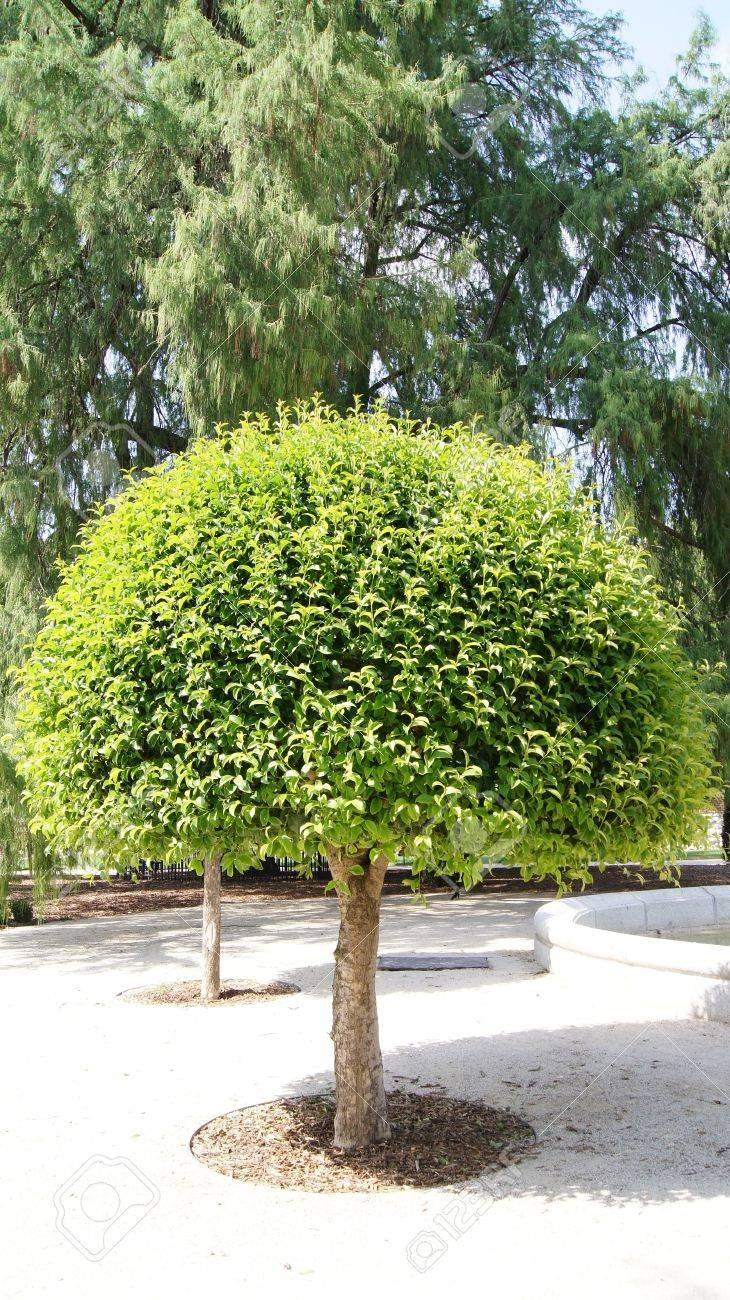 Piccolo Albero Verde In Giardino Foto Royalty Free, Immagini ...