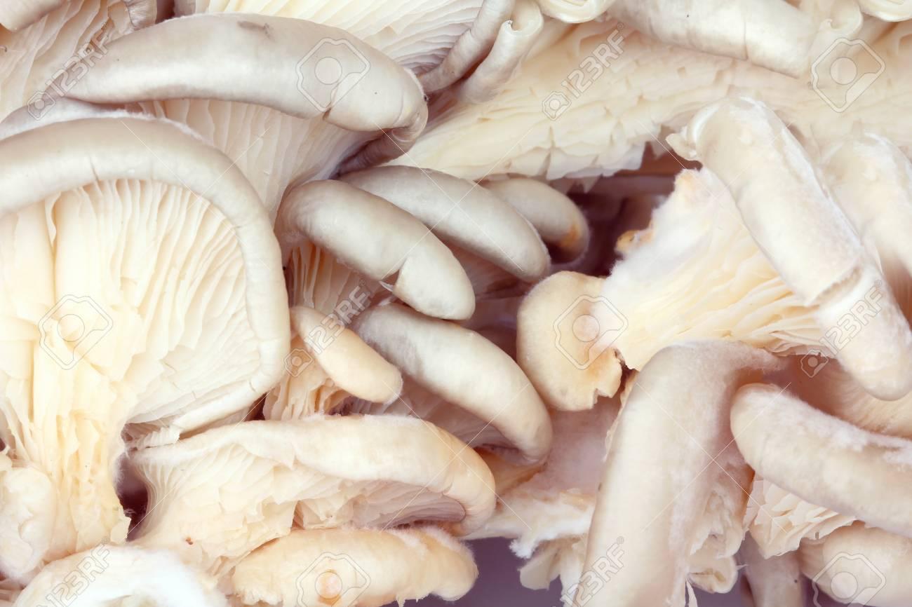 Oyster mushrooms background, macro shot Stock Photo - 10452369