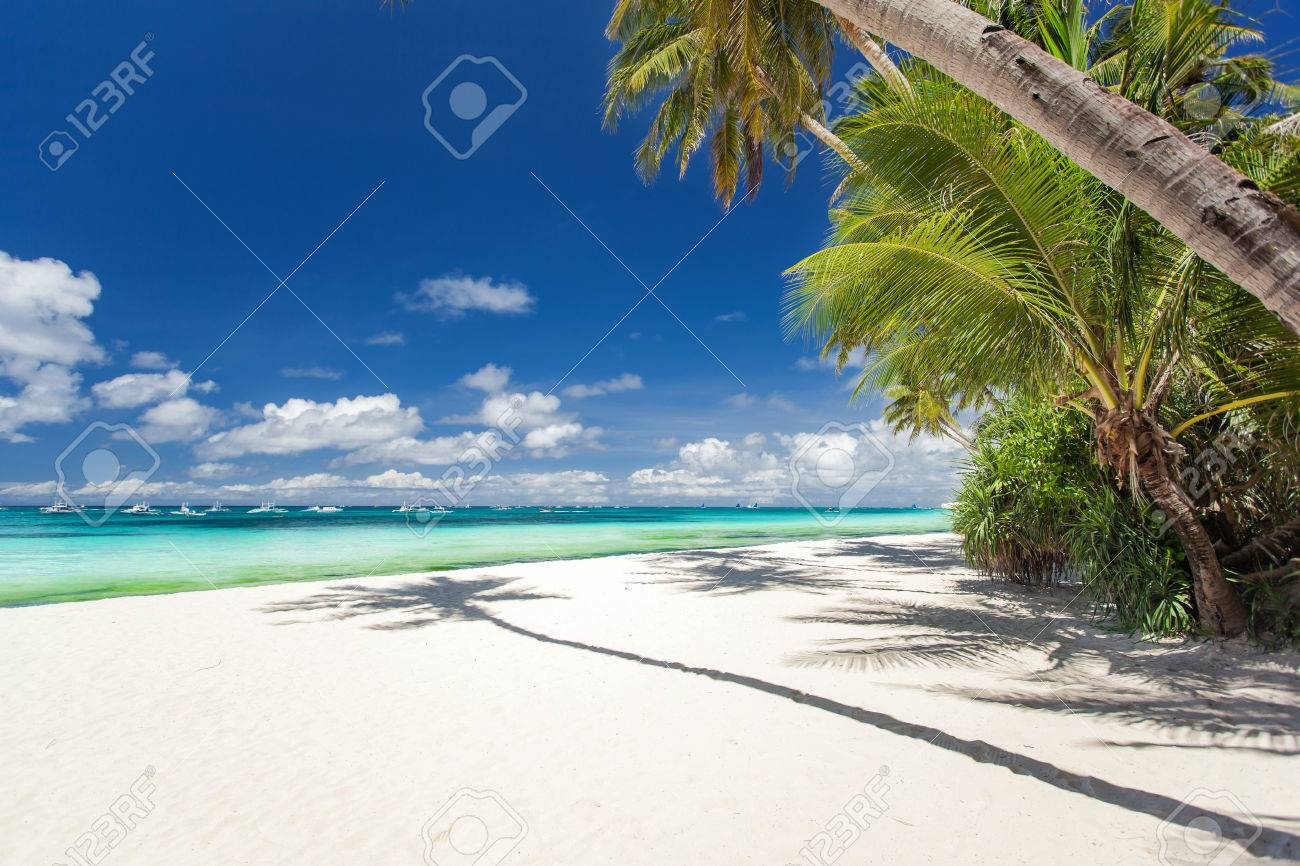 Tropical beach with palm and white sand, Philippines Stock Photo - 22441428