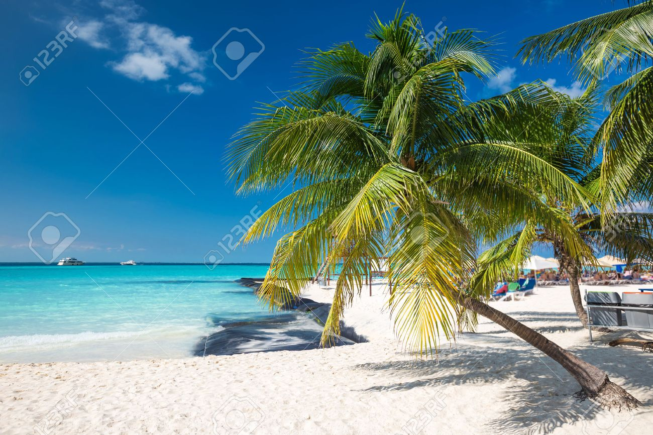Coconut palm on caribbean beach, Cancun, Mexico Stock Photo - 36555374
