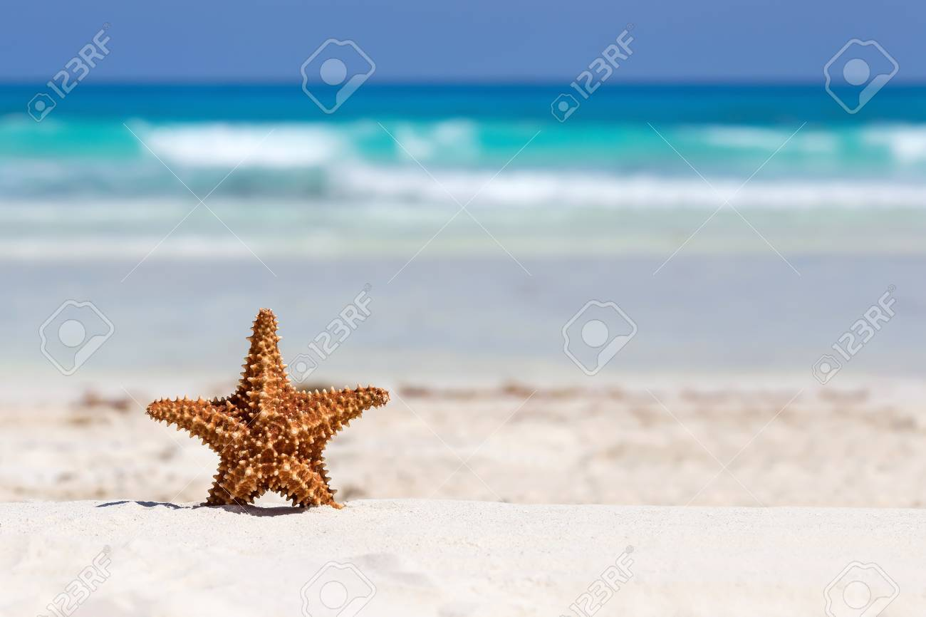 Starfish on caribbean sandy beach, travel concept Stock Photo - 40049018