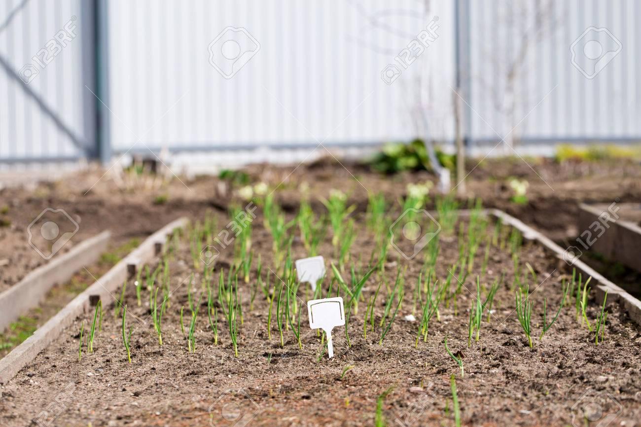 Blanco Tablero Plstico Blanco En Las Jardineras Con Plantas