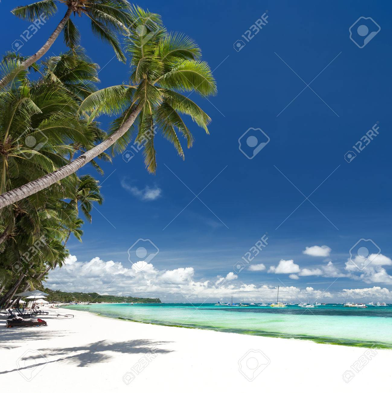 seashore with coconut palm trees. tropical destinations stock photo