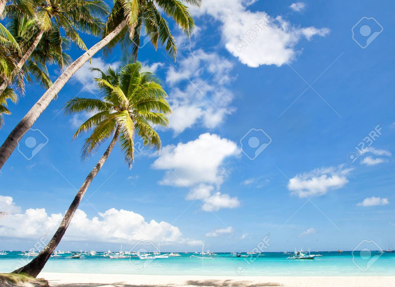 coconut palm trees on tropical sandy beach, travel destinations