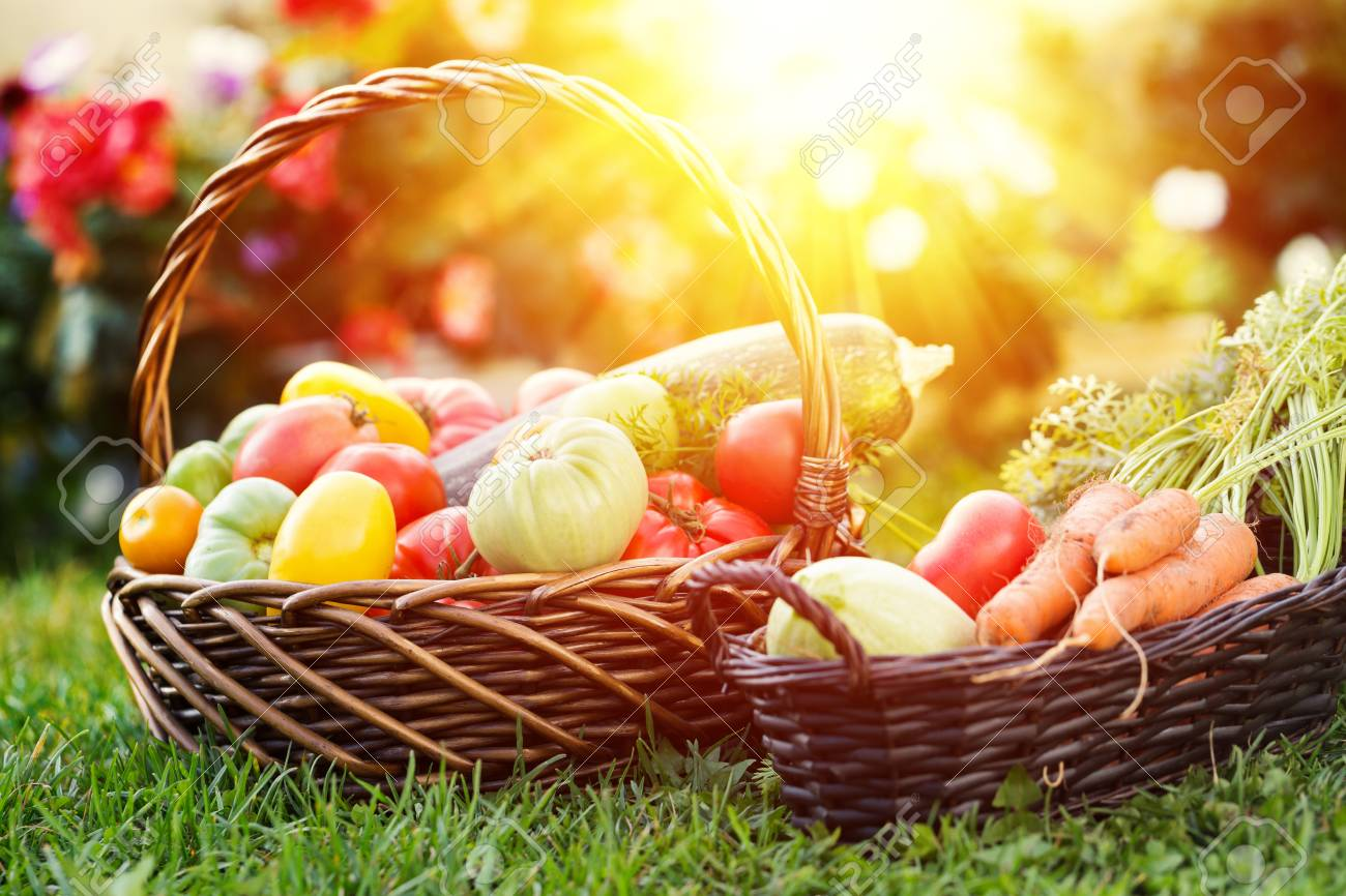 Vegetables in basket at the garden, outdoor. Summer harvest - 122012315