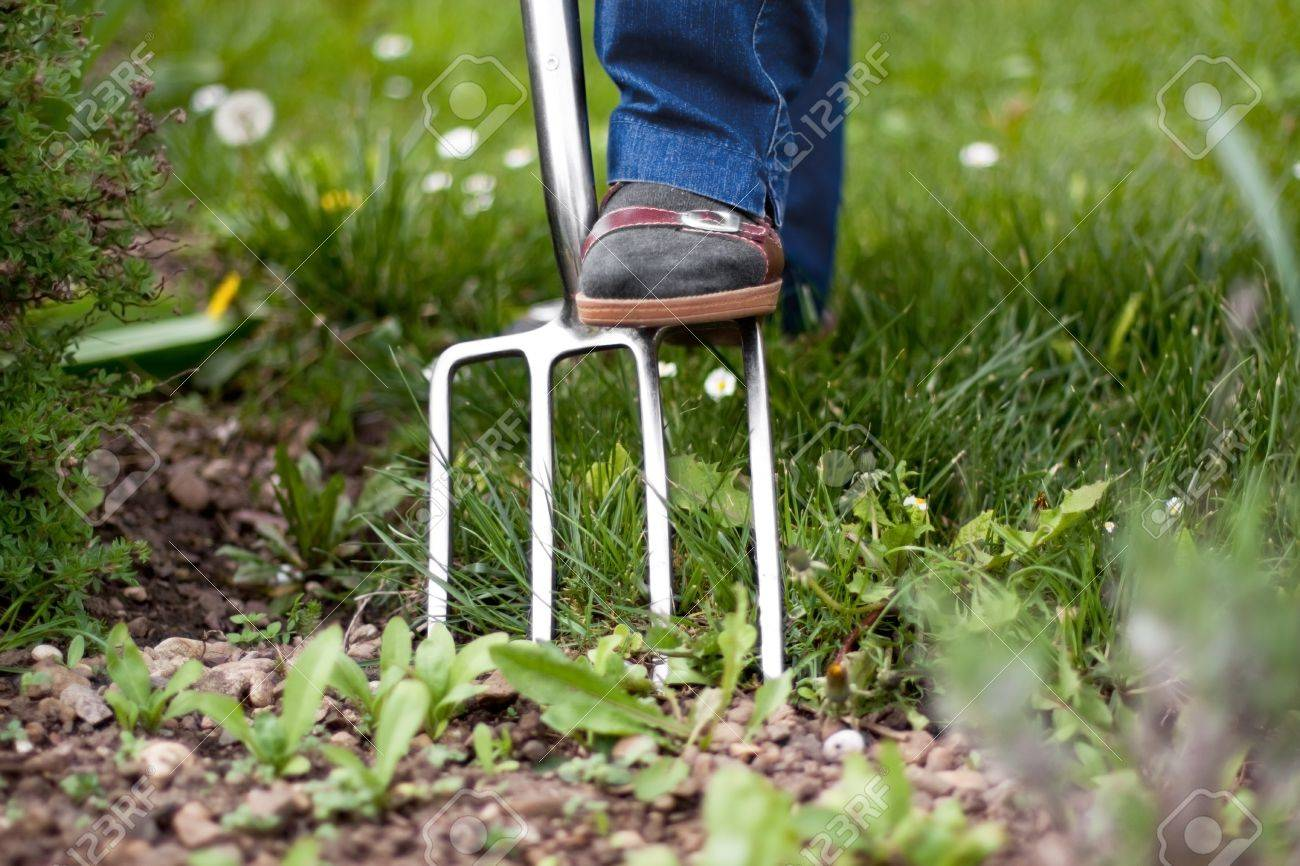 Foot Of A Pensioner On Pitchfork In The Garden Stock Photo