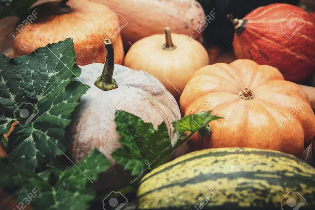 Autumn market with various sorts of pumpkins, thanksgiving and marrows, Cucurbita maxima - 168974724