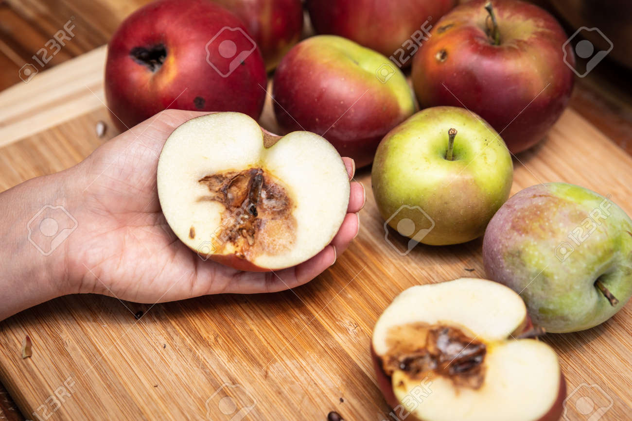 Woman holding a half organic apple with maggots, disgusting and unhealthy, insects and worms - 168974758
