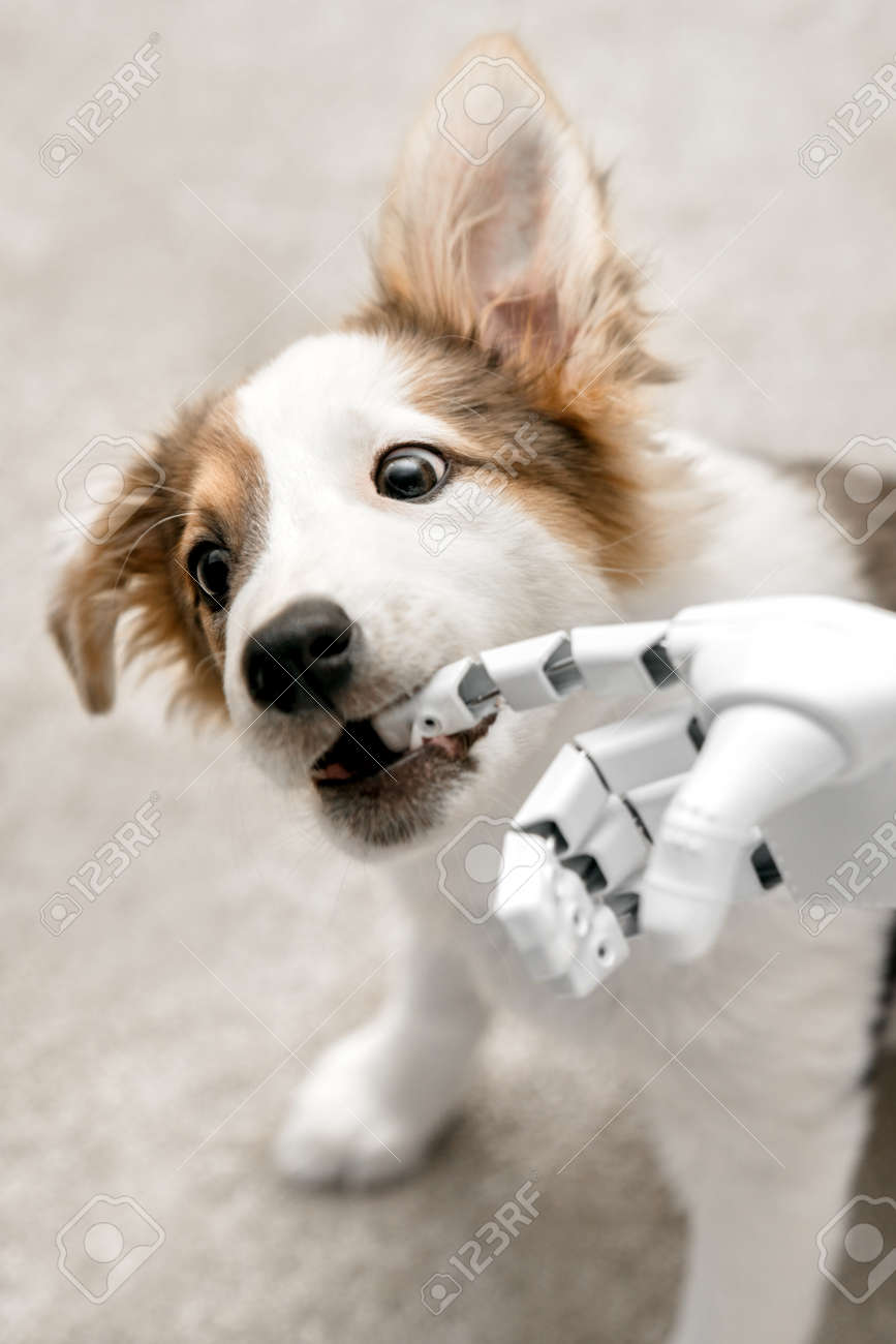 cyborg or robot hand is holding his finger to a puppy, sitting on the floor. concept cybernetic or robotic - 168974779