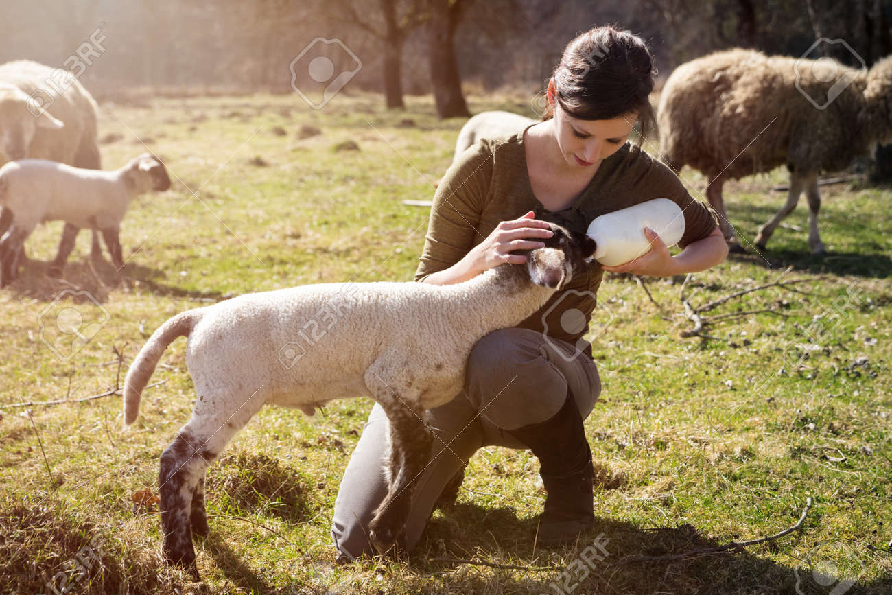 young woman feeding a lamb with a bottle of milk, hand raising - 170231197