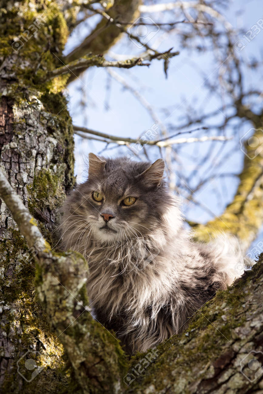 Long-haired cat sitting on a tree, concept rescue for a trapped pet - 170230767