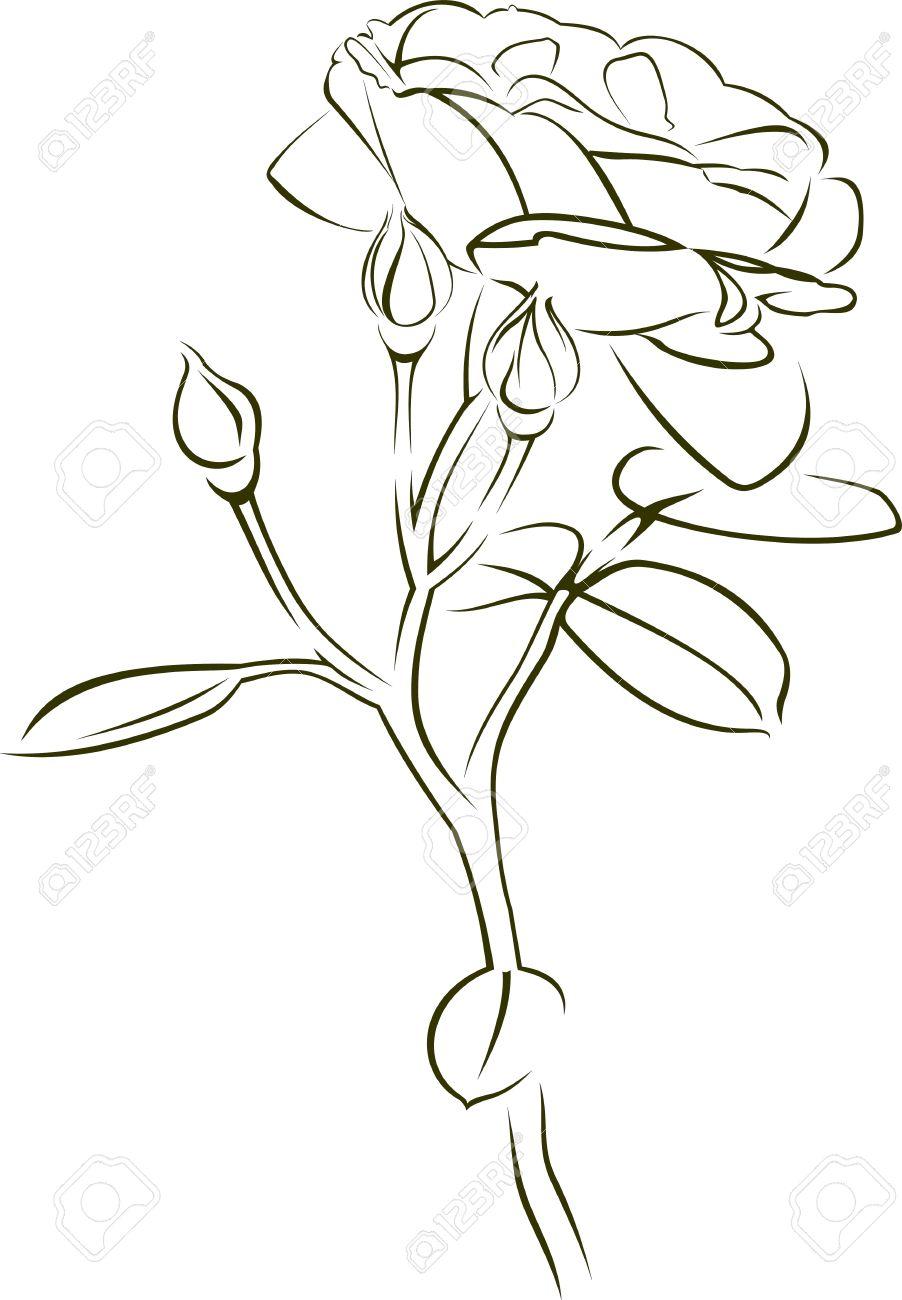 Stammes-Rose wie Standard-Bild - 12802704