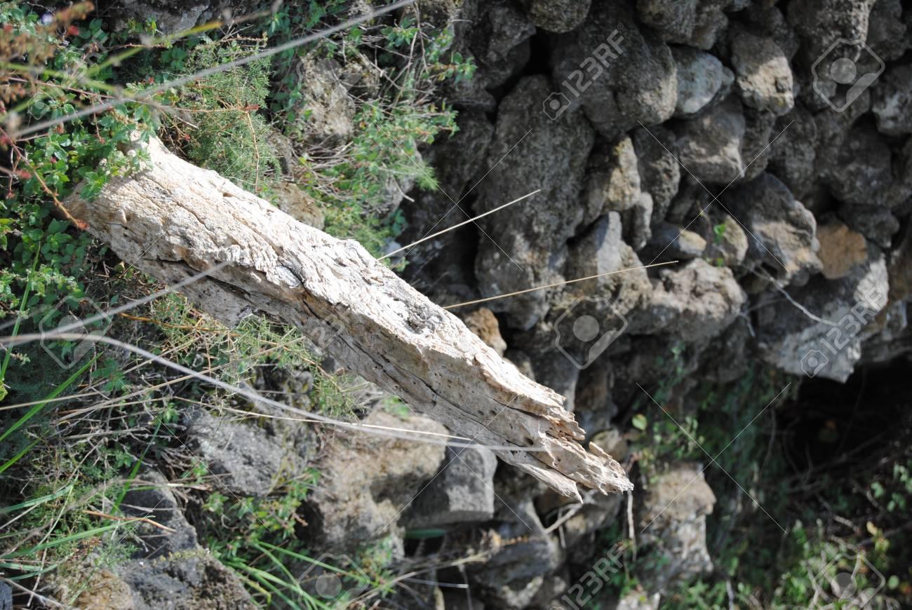 Einfach Steinwand Farbe ~ Baum mit weißer hölzerner farbe der welt mit einer steinwand und