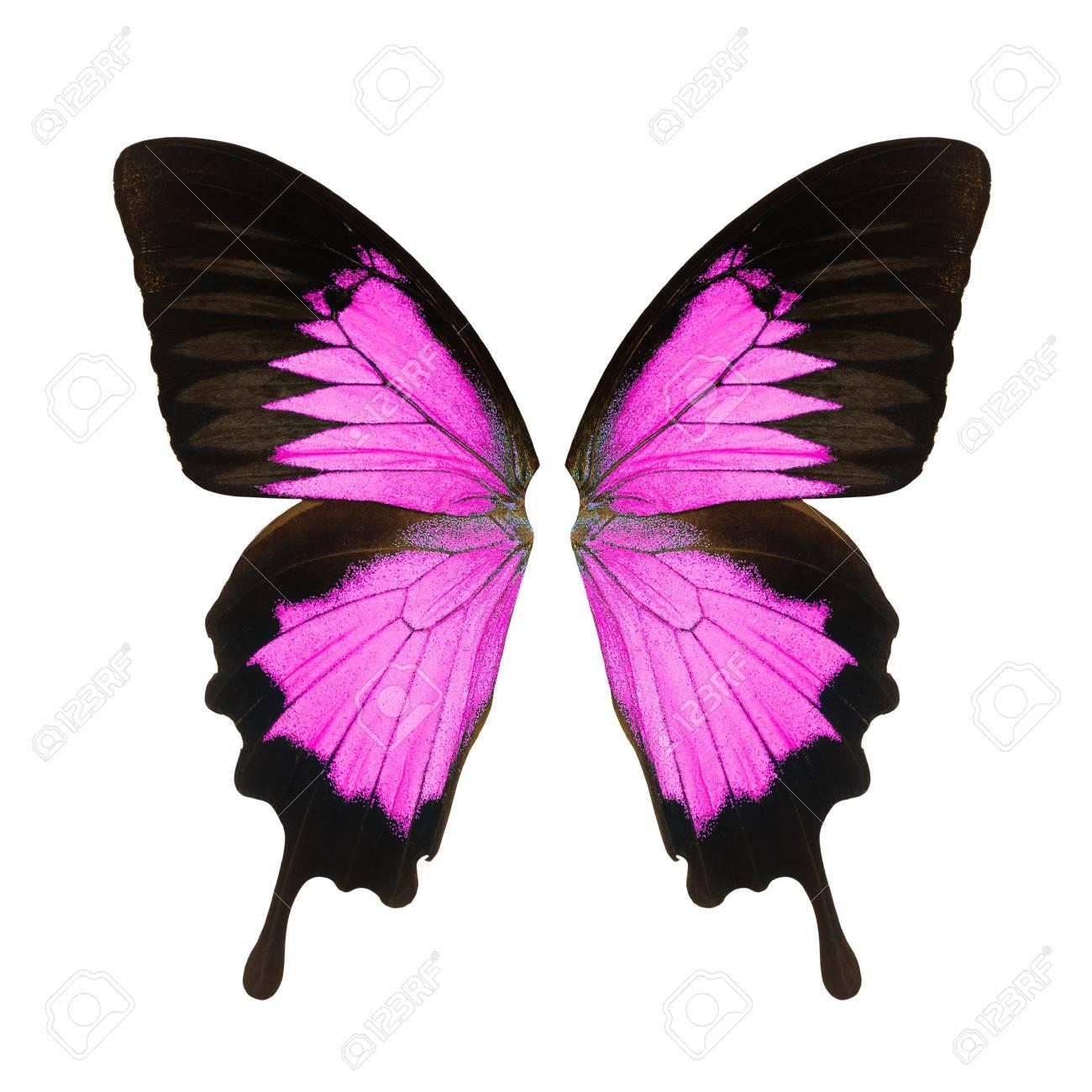 Aile De Papillon aile de papillon, isolé sur fond blanc banque d'images et photos