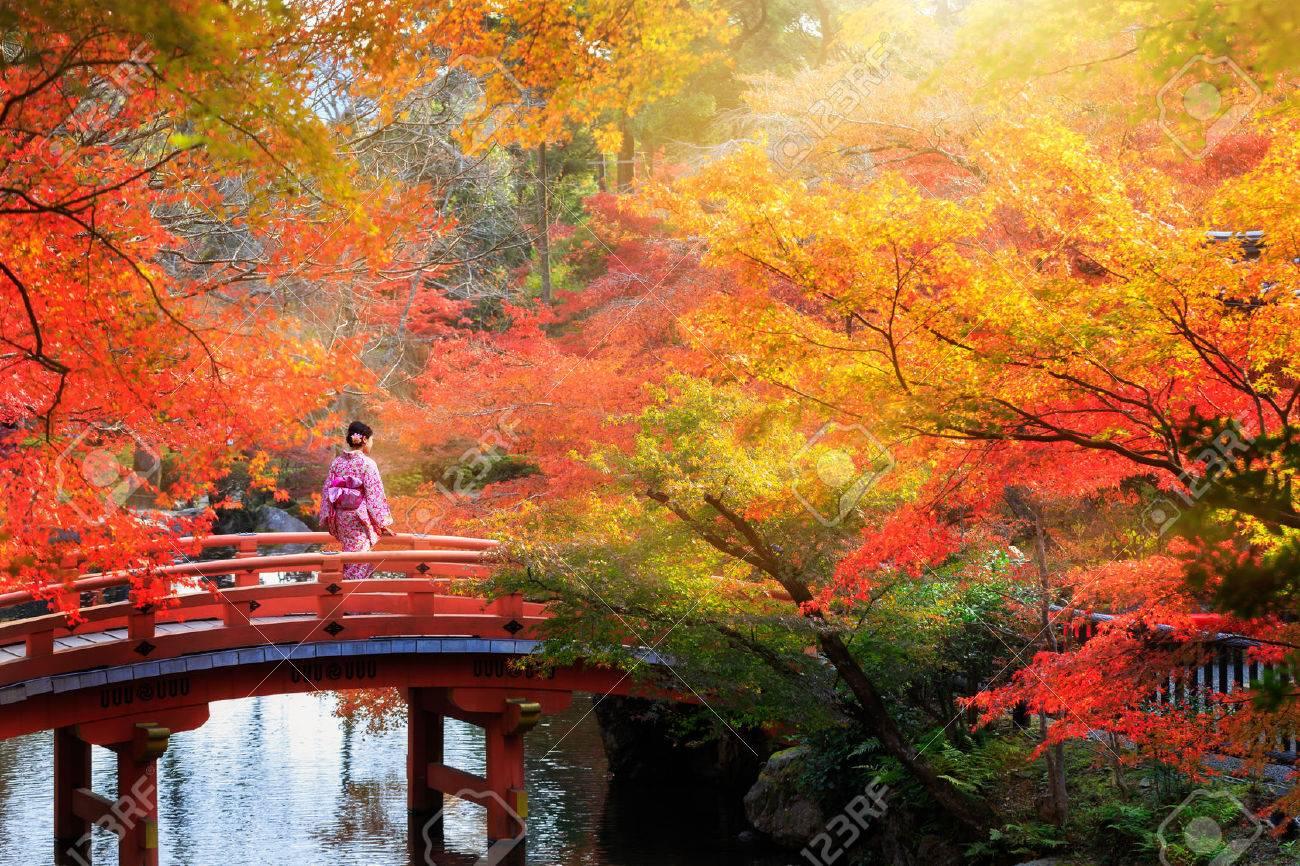 Wooden bridge in the autumn park, Japan - 57375035