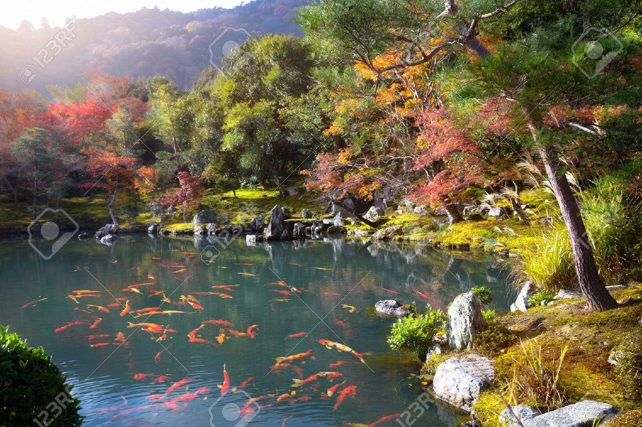 Zen garden of the tenryu-ji temple, Arashiyama Kyoto Japan - 57375139