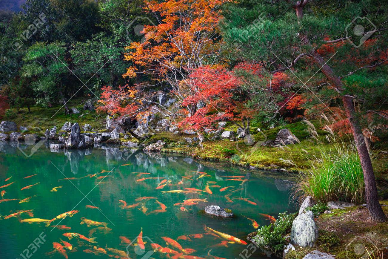 Autumn landscape, Japan - 155172558