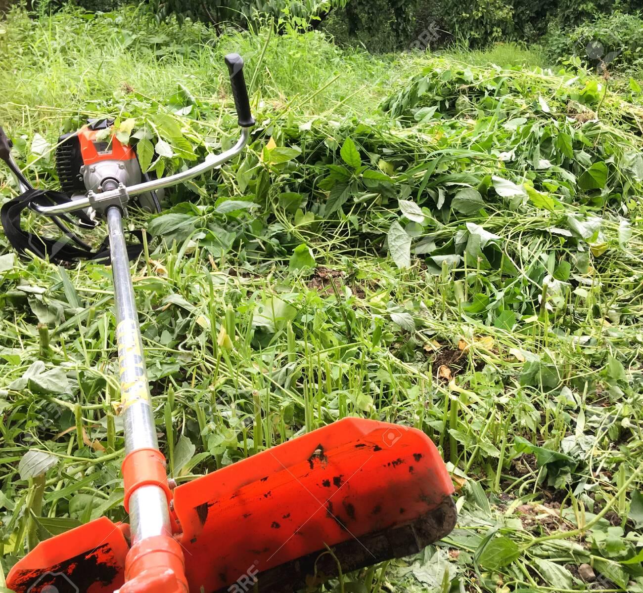Lawn mower, grass, equipment, mow gardener care work tool - 148013006