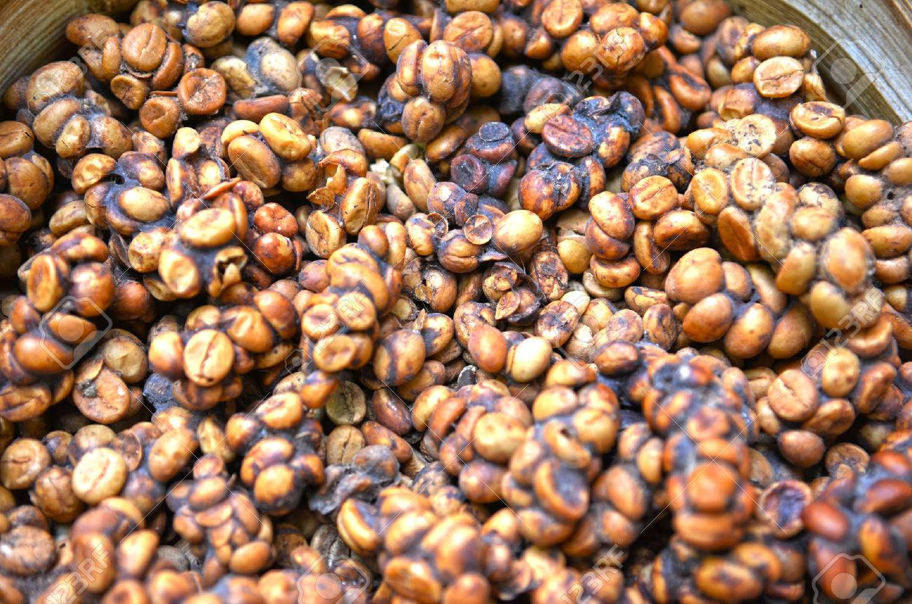 close up of kopi luwak coffee bean stock photo picture and royalty
