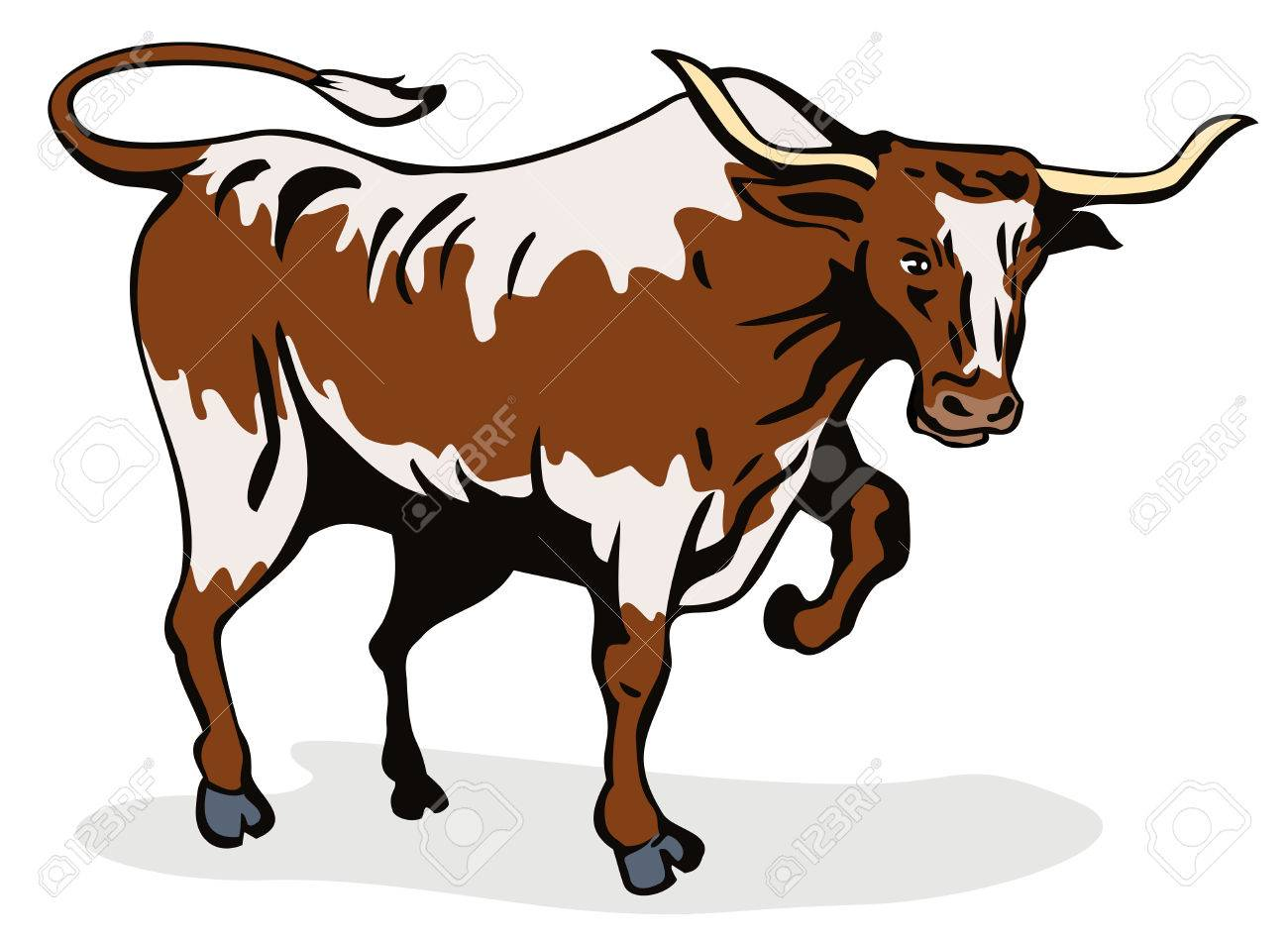 Texas longhorn bull about to attack Stock Vector - 2046578