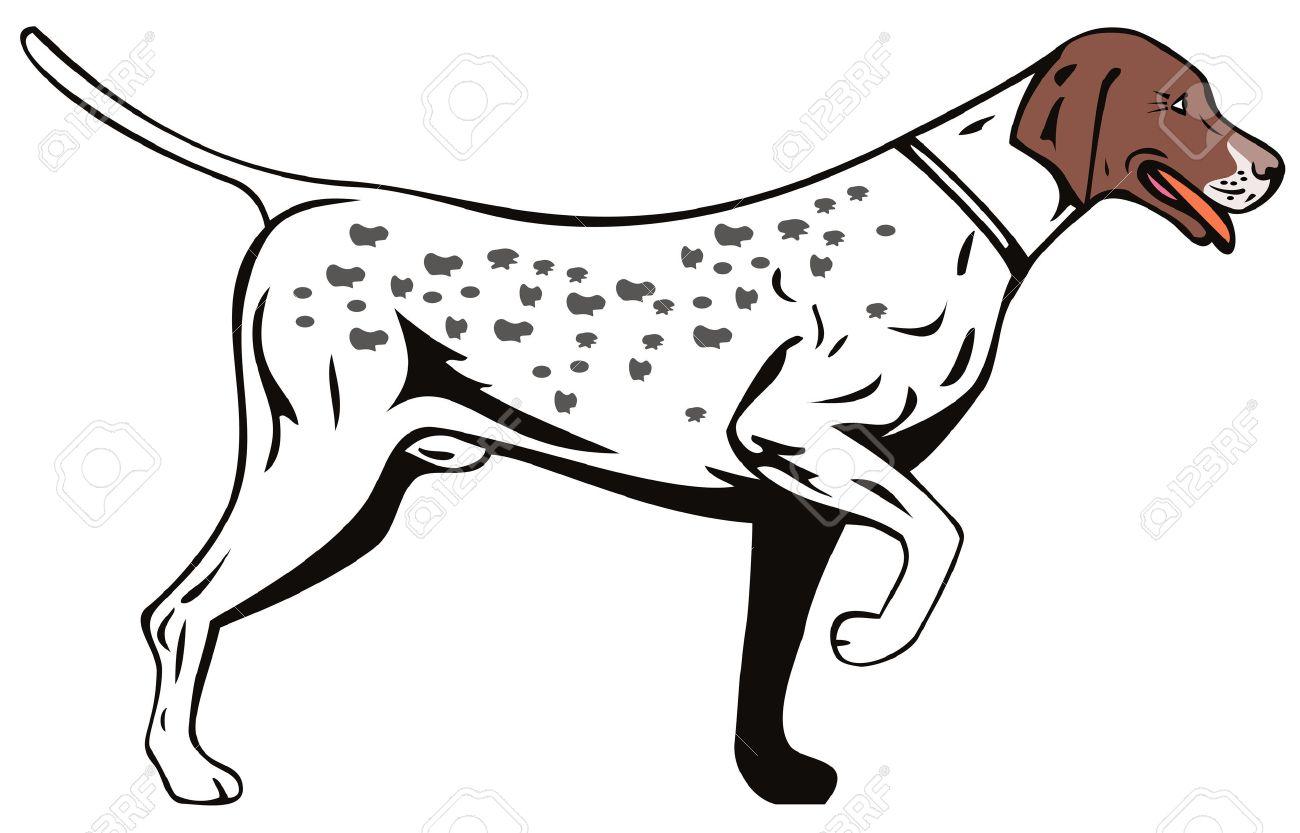 Pointer dog Stock Vector - 3254435