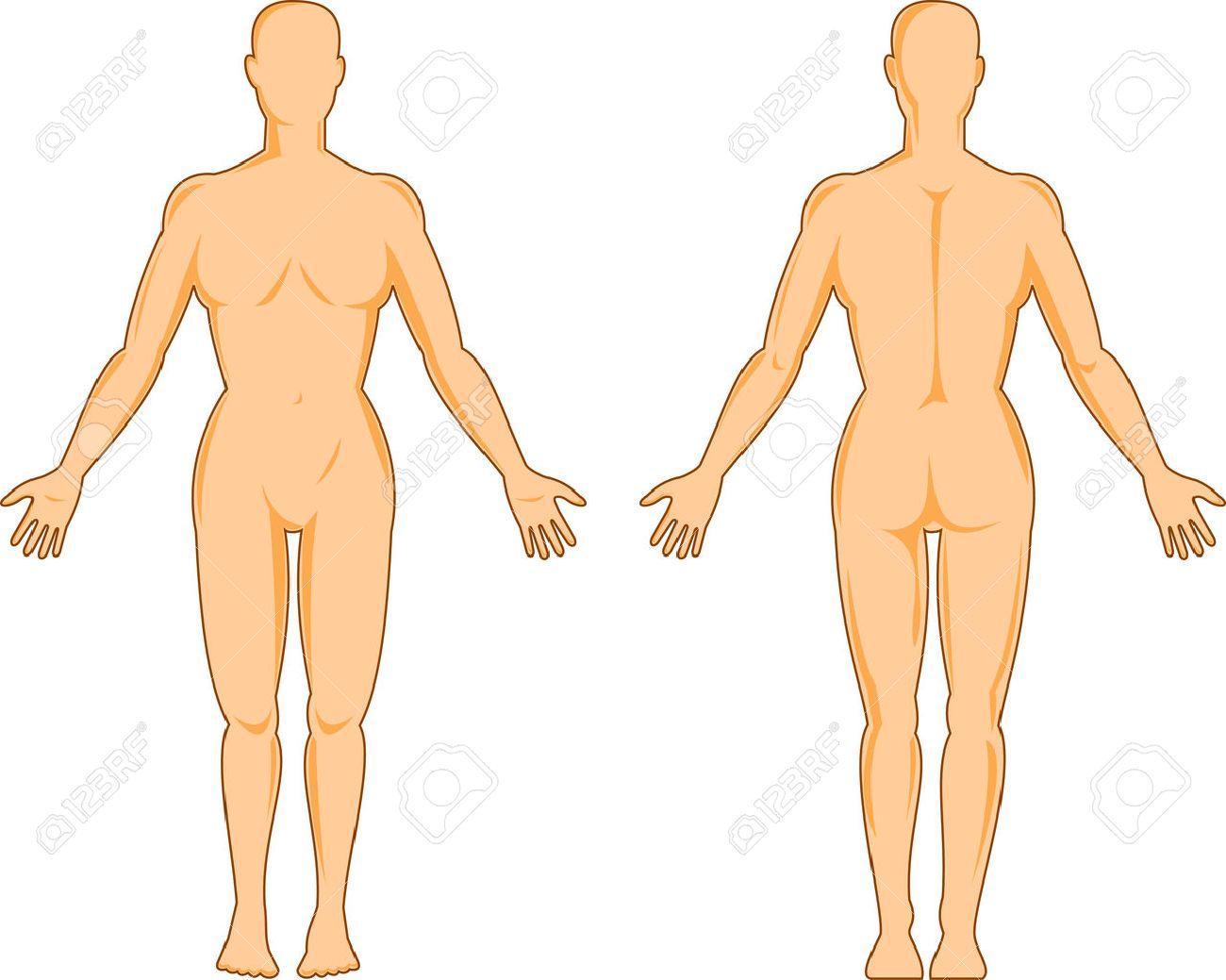 Mujeres De La Anatomía Humana Delante Y Detrás Ilustraciones ...