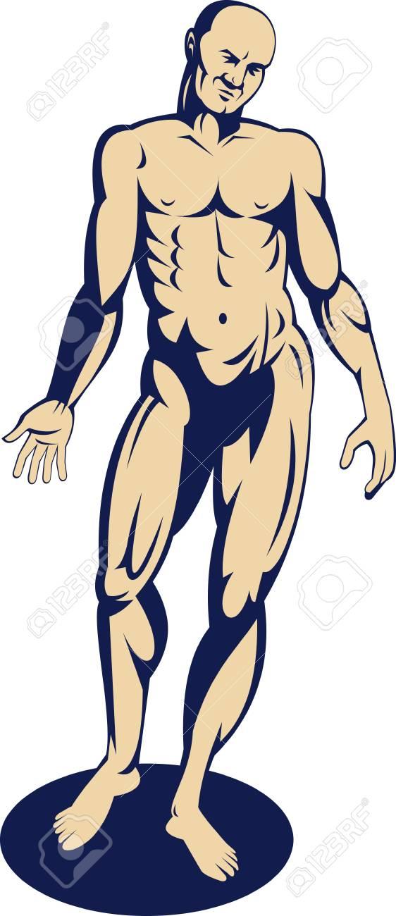Permanente De La Anatomía Humana Masculina Con Los Brazos En Lado ...