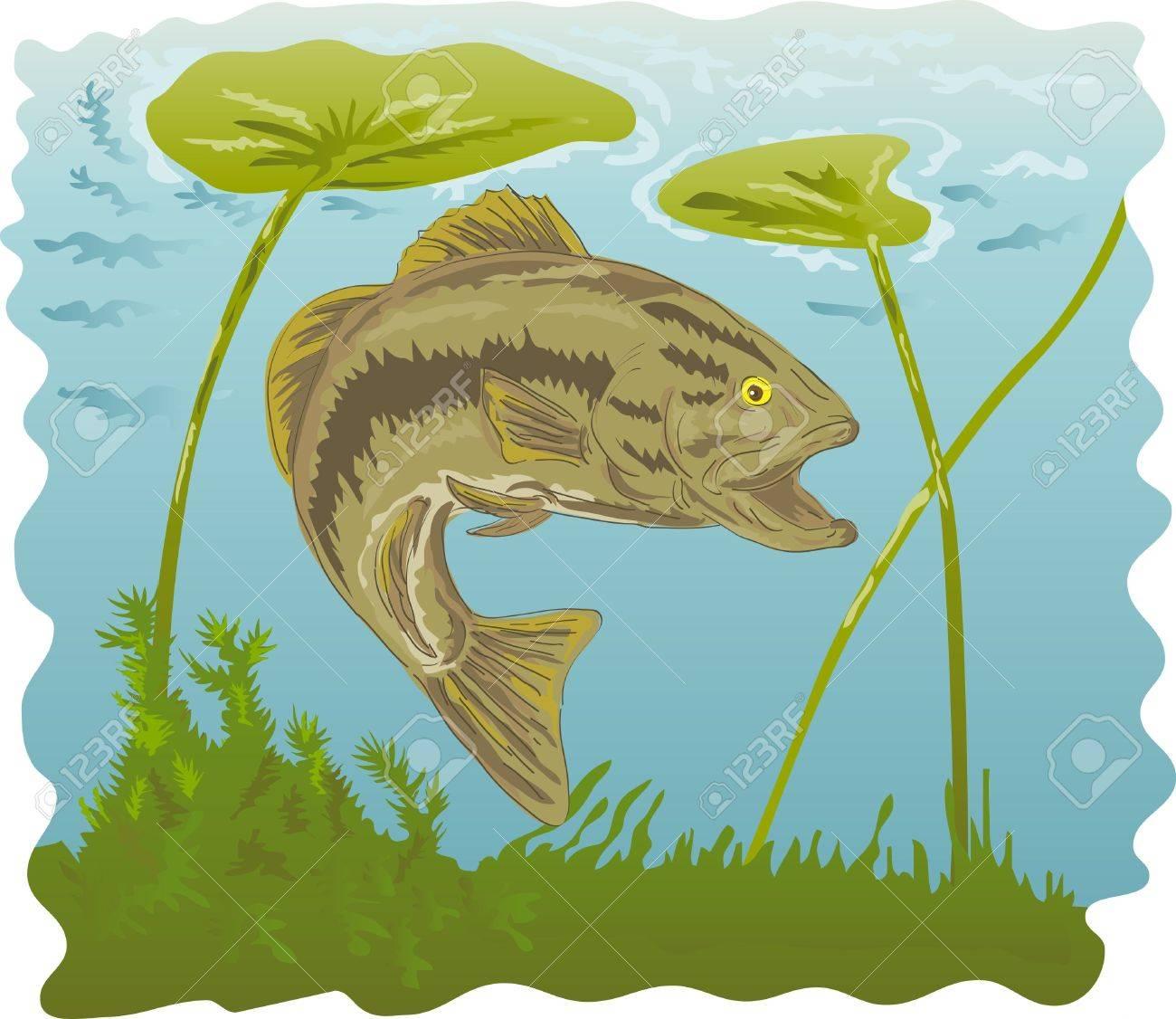 largemouth bass underwater Stock Photo - 7238234