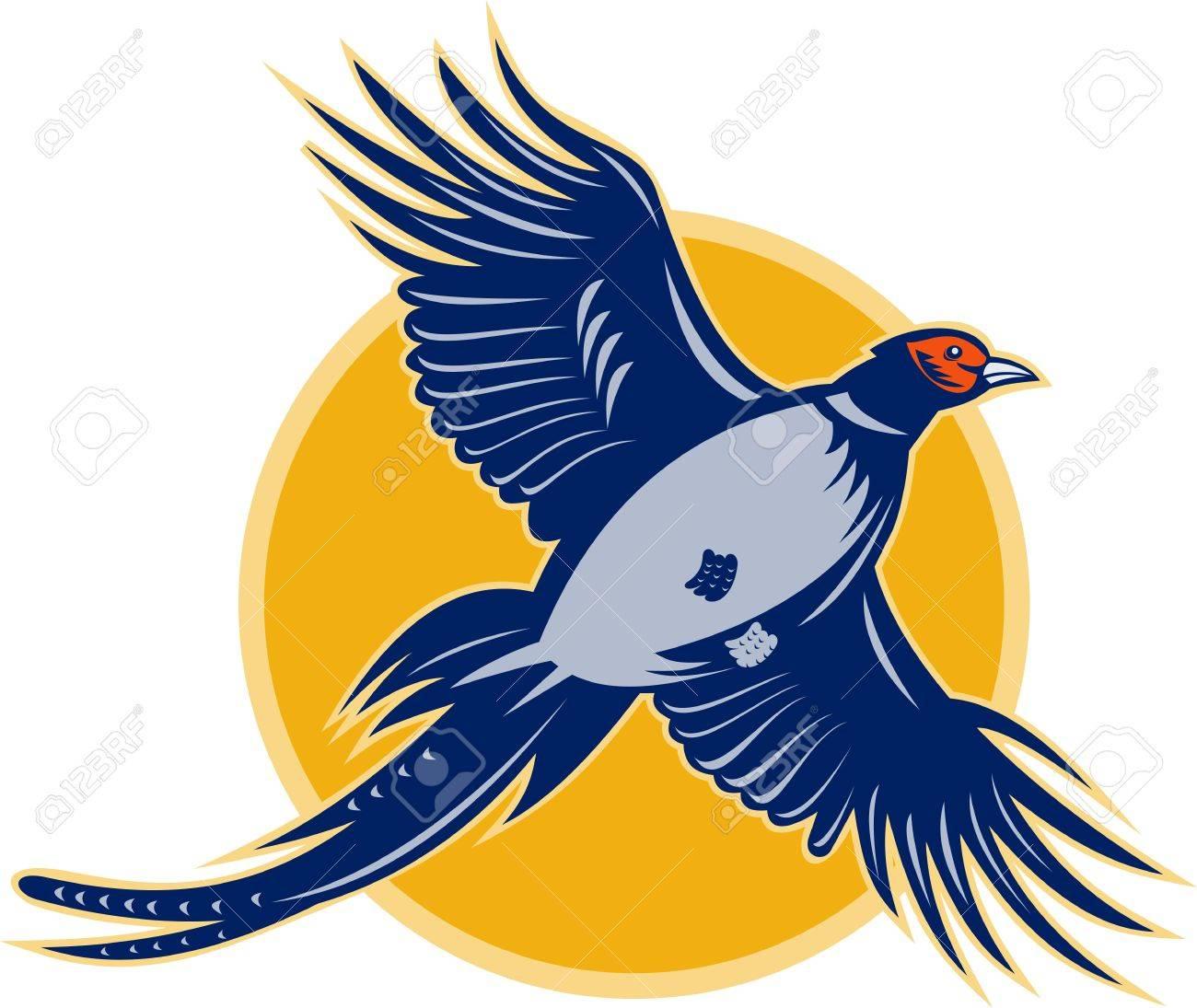 飛んでいるキジ鳥のイラストは低い角度から見た の写真素材画像素材