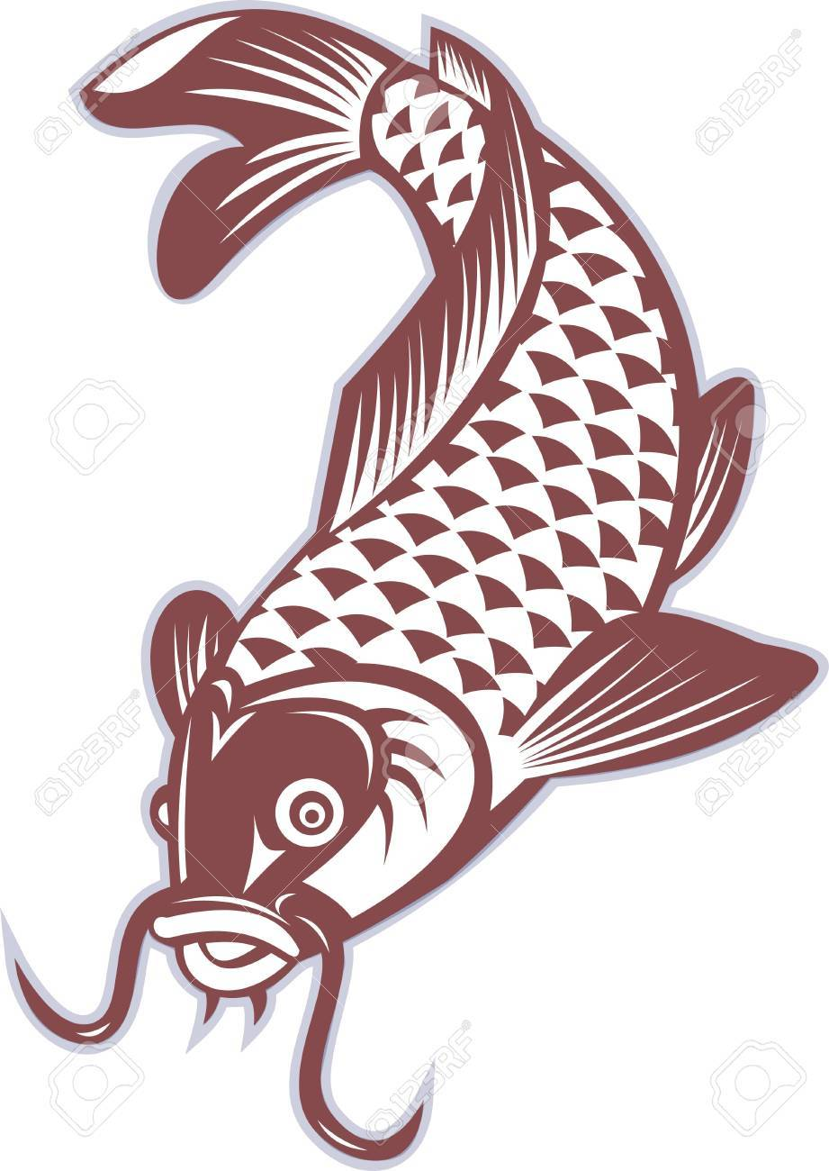 illustration of a Koi carp swimming down on isolated white background Stock Illustration - 10066771