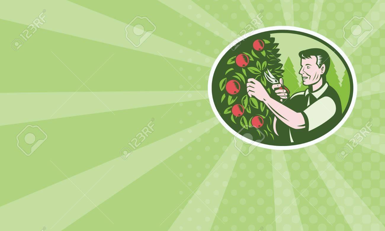 Arbre Fruitier D Intérieur illustration d'un agriculteur de fruits horticulteur sélecteur de la taille  des arbres fruitiers verger coupe fait dans le style rétro gravure sur